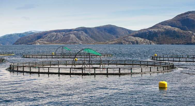 Aquaculture seen from above the water