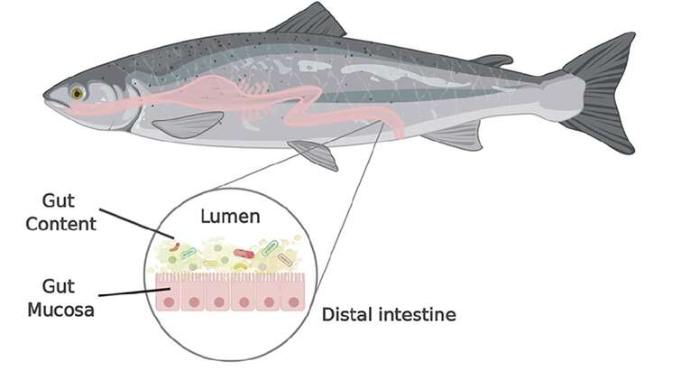 Picture of a Salmon and its micriobiome