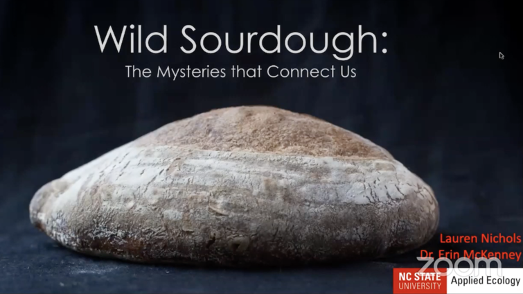 Wild Sourdough project